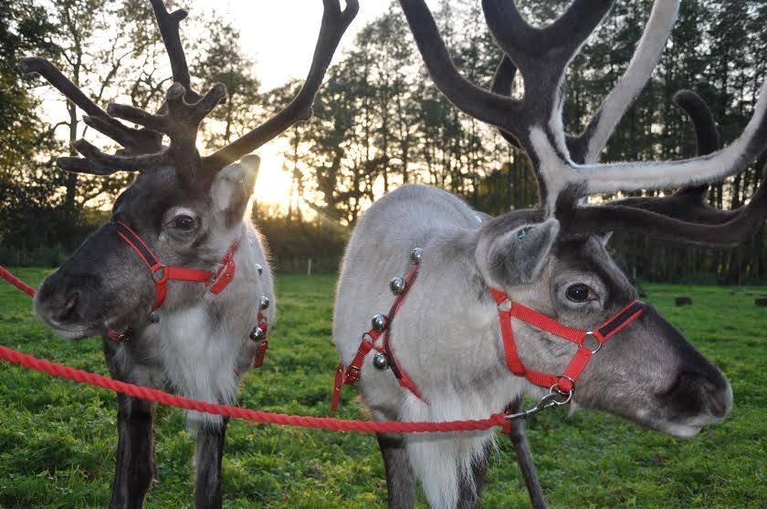 reindeer-magic